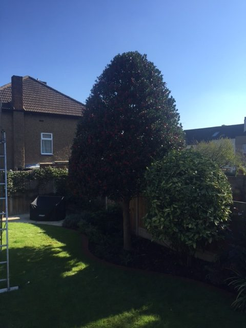 ben edwards little tree company brighton up a tree services